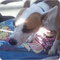 Adopt A Pet :: Taylor - Glastonbury, CT