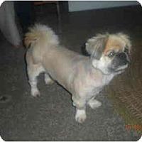Adopt A Pet :: Nicholas Paul - Summerville, SC