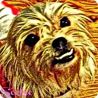 Adopt A Pet :: Sookie-VA - Suffolk, VA