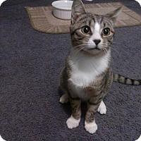 Adopt A Pet :: Leonidas - Port Republic, MD
