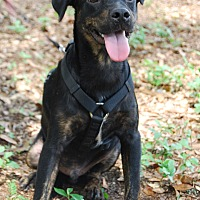 Adopt A Pet :: Tommie - Crawfordville, FL