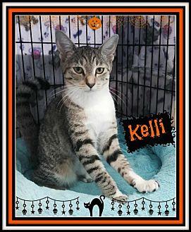 Domestic Shorthair Kitten for adoption in San Jose, California - GAP-Kelli