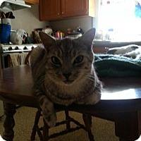 Adopt A Pet :: Smokey - Statesville, NC