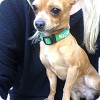 Adopt A Pet :: Sandals - Los Angeles, CA
