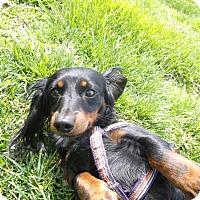 Adopt A Pet :: Sara - Georgetown, KY