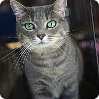 Adopt A Pet :: A..  Victoria - Charlotte, NC