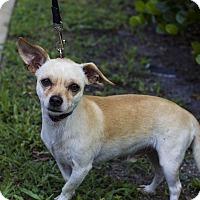 Adopt A Pet :: Alfredo - Jupiter, FL