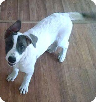 German Shepherd Dog/Great Pyrenees Mix Dog for adoption in Madison, Wisconsin - Ginger PENDING!