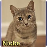 Adopt A Pet :: Niobe - Aldie, VA