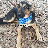 Adopt A Pet :: Rambo pending adoption - Manchester, CT
