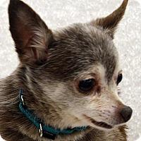 Adopt A Pet :: Turbo - Bridgeton, MO