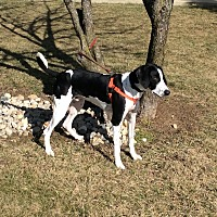 Adopt A Pet :: Pluto - Mechanicsburg, OH
