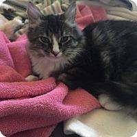 Adopt A Pet :: Preston Maxwell - Sedalia, MO