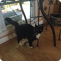 Adopt A Pet :: Fluffer - Atlanta, GA