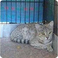 Adopt A Pet :: Spitfire - Lantana, FL