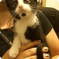 Adopt A Pet :: Milk Dude - Troy, OH