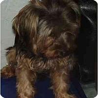 Adopt A Pet :: Sparky - Miami, FL