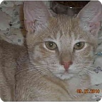 Adopt A Pet :: Malcom - Riverside, RI