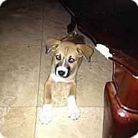 Adopt A Pet :: Annie - Lake Forest, CA