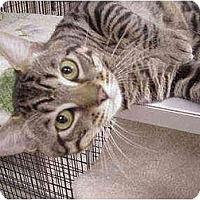 Adopt A Pet :: Jeremy - Deerfield Beach, FL