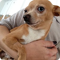 Adopt A Pet :: Diego John - North Hollywood, CA