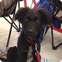 Adopt A Pet :: Big Dipper - Lakeville, MN