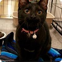 Adopt A Pet :: Shirley - Sacramento, CA