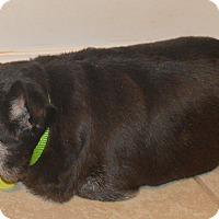 Adopt A Pet :: Suzanna - Prole, IA