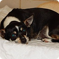 Adopt A Pet :: Holly CJ in AR - Providence, RI