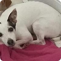 Adopt A Pet :: Riley - Paducah, KY
