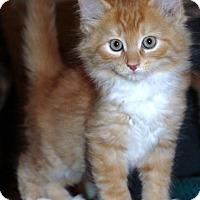 Adopt A Pet :: Berle (GP) 3.9.17 - Orlando, FL