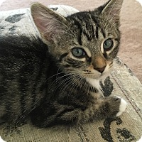 Adopt A Pet :: Tye - Monroe, GA