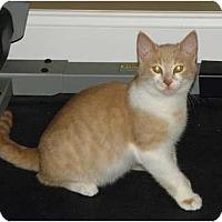 Adopt A Pet :: Oscar - Barnegat, NJ