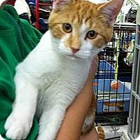 Adopt A Pet :: Steve - Riverhead, NY
