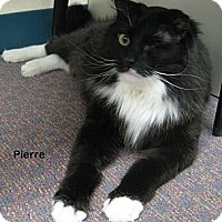 Adopt A Pet :: Pierre - Portland, OR