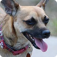 Adopt A Pet :: Henry - Kempner, TX