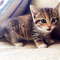 Adopt A Pet :: Sassy - Xenia, OH