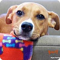 Adopt A Pet :: Bonny - Marietta, GA
