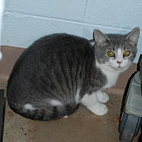 Adopt A Pet :: Thumper - Salem, WV