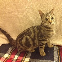 Adopt A Pet :: Merlin - Santa Rosa, CA