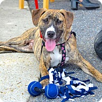 Adopt A Pet :: Caleb - Reisterstown, MD