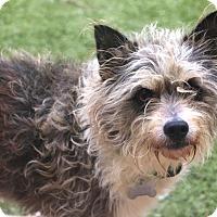 Adopt A Pet :: Sterling - Norwalk, CT