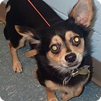 Adopt A Pet :: Duckie - Orlando, FL