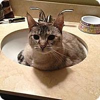 Adopt A Pet :: Sophia - Lauderhill, FL