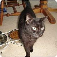 Adopt A Pet :: Ebony - Ft. Lauderdale, FL