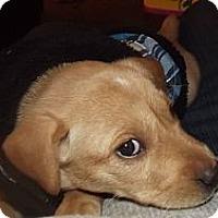 Adopt A Pet :: Skye - Fort Riley, KS