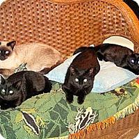 Adopt A Pet :: *Maresca1 (Momma) - Winder, GA