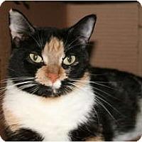 Adopt A Pet :: Calypso - Naples, FL