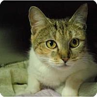 Adopt A Pet :: Christina - Lunenburg, MA