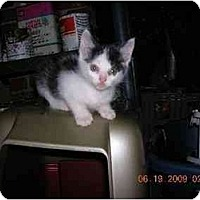 Adopt A Pet :: Jo Jo - Union, SC